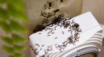 Karıncaları Evden Uzaklaştırmanın 10 İlginç Yöntemi