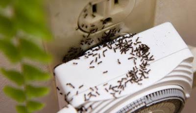 karıncaları evden uzaklaştırma