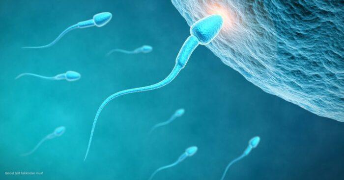 spermlerle i̇lgili bildiklerinizi rafa kaldırın1