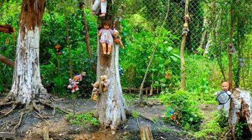 Japonya İntihar Ormanı Hakkında Korkunç Bilgiler