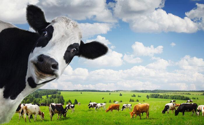hayvancılık kredisi veren bankalar hangileridir