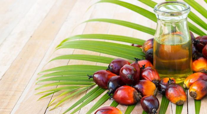 palm yağının faydaları