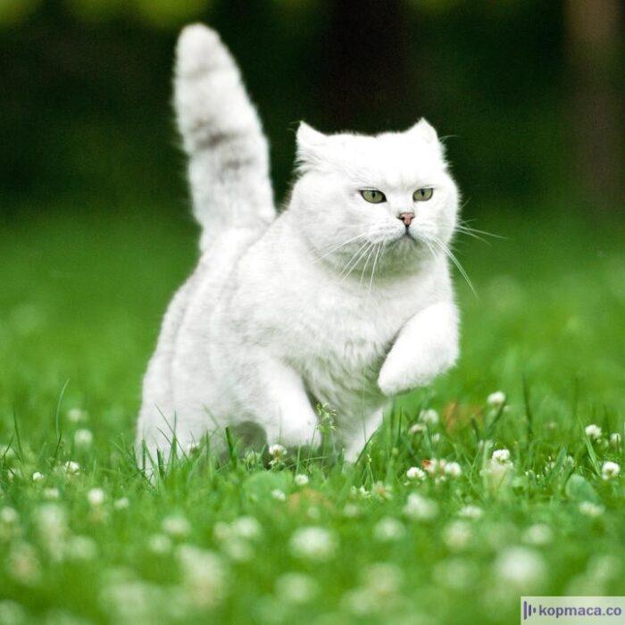 Kedilerin Vücut Dili
