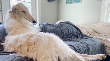 Dünyanın En Uzun Burunlu Köpeği; Eris
