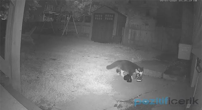 Hatta Komşuların Ayakkabılarını Çalan Kedi