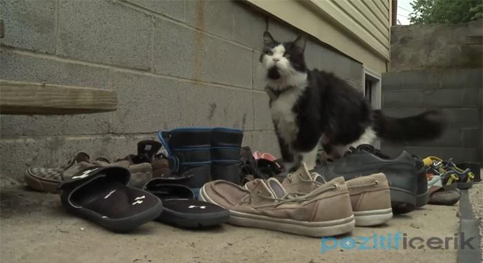 Komşuların Ayakkabılarını Çalan Kedi