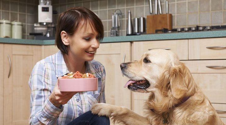 Evde Beslenebilecek 5 Köpek Türü