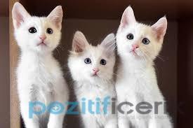 Kedilerin Bilinmeyen 5 Yönü