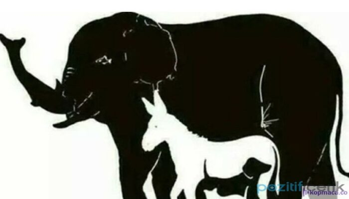 Resimde kaç hayvan görüyorsunuz? Cevabı