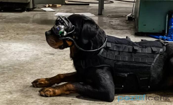 abd ordusu, köpekler için artırılmış gerçeklik gözlük test ediyor'