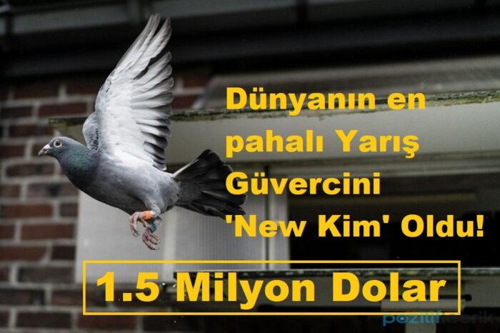 dünyanın en pahalı yarış güvercini 'new kim' oldu!
