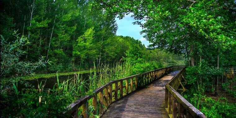 i̇ğneada longoz ormanları milli parkı / kırklareli