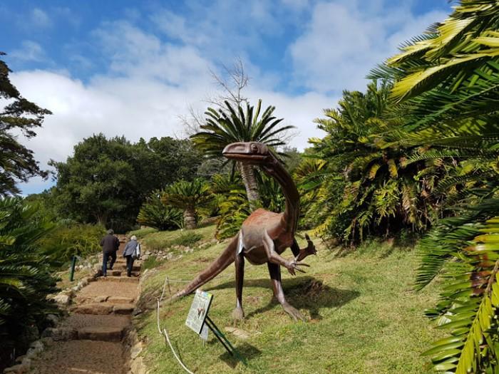 3. kirstenbosch botanik bahçesi, güney afrika