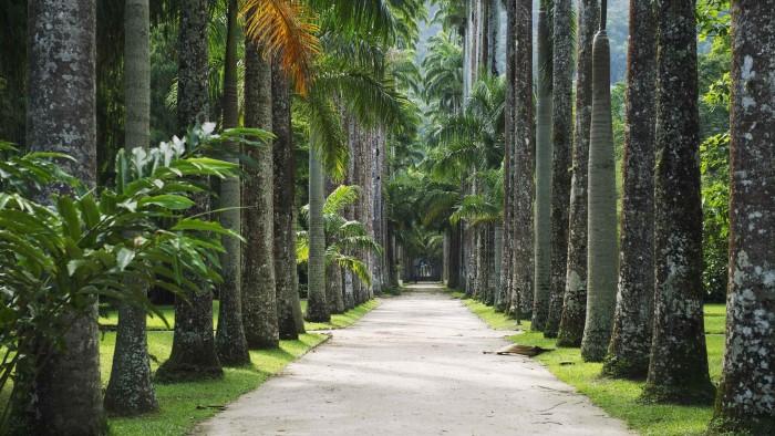 6. rio de janeiro botanik bahçesi, brezilya