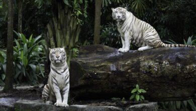 kaç yıl yaşadığı en çok merak edilen 10 hayvan